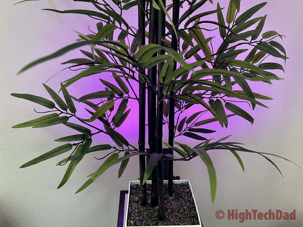 Purple Ambient Lighting - Nooie Aurora Smart LED bulb - Review by HighTechDad